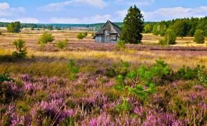 Heideblüte- Fereinhaus Heide - Heide Lodge